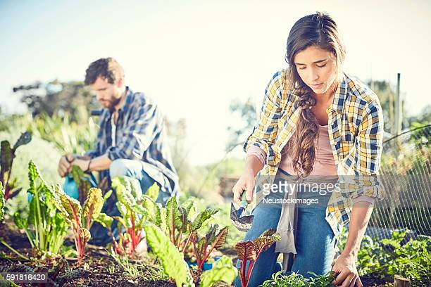 Friends gardening on field during sunny day