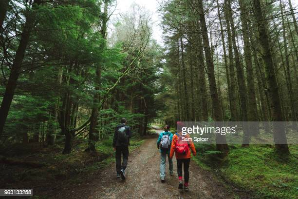 friends hiking through beautiful green forest - woodland stock pictures, royalty-free photos & images