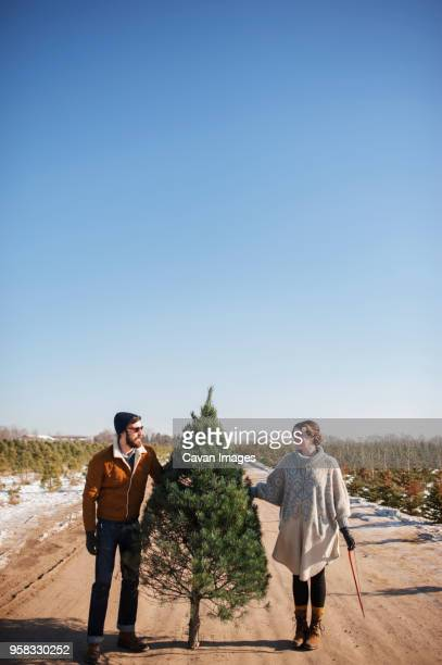 friends holding christmas tree on road against clear blue sky - christmas tree farm stock pictures, royalty-free photos & images
