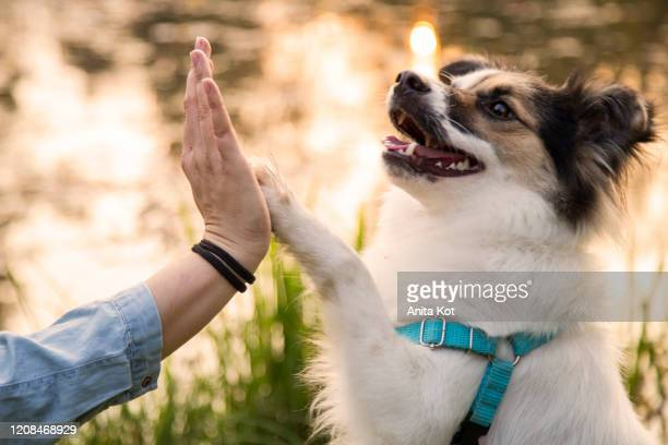 friends - dog show stock pictures, royalty-free photos & images