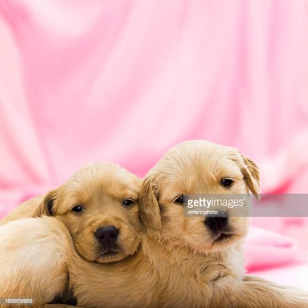 friends puppies - twee dieren stockfoto's en -beelden