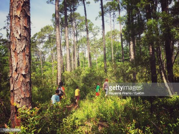 friends walking amidst trees in forest - hilton head stock pictures, royalty-free photos & images