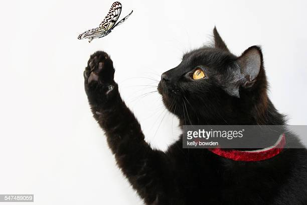 Friendship between the cat and the butterfly