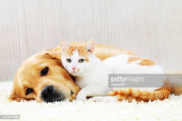 friendship of a dog and cat. - dog and cat stock photos and pictures