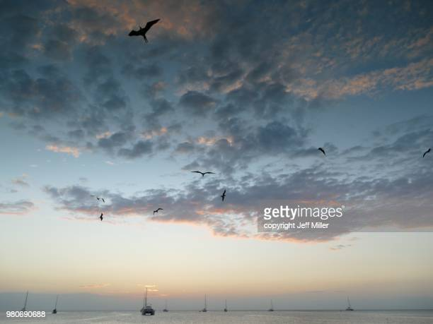 Frigate birds in sky over Ambergris Caye, Belize