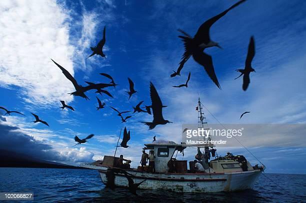 Isabela Island, Galapagos Archipelago, Ecuador.