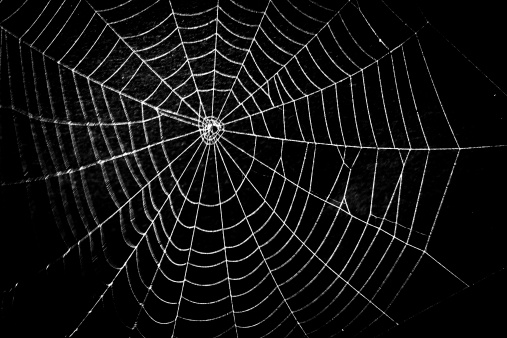 Frightening spider web for Halloween 180176694