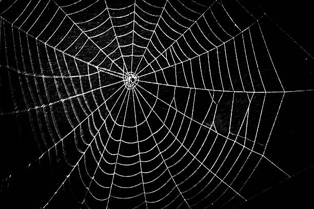 Image result for spider web pictures