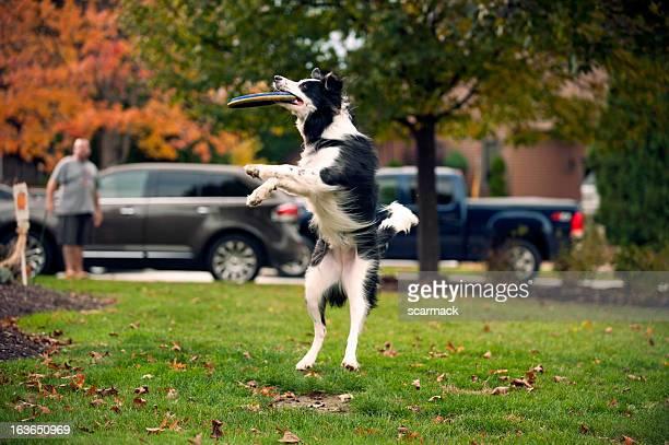 Frisbee Leap