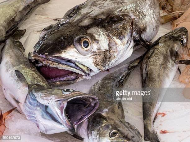 Frische Fische zu verkaufen
