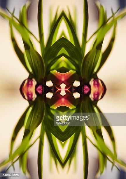 Fritillaria flower plant