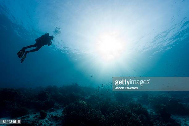 The silhouette of a scuba diver swimming through sunrays above a coral reef in a tropical ocean.