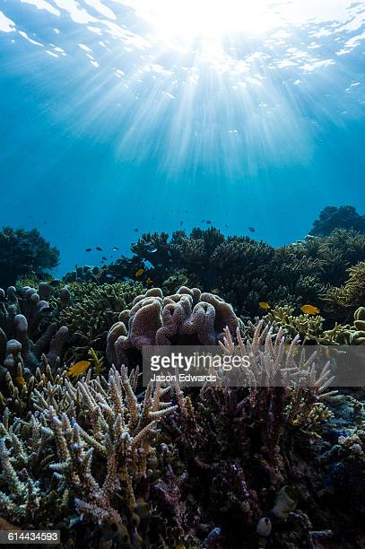 Sunrays fall across a pristine reef of Staghorn Coral and a soft coral shaped like a toadstool.