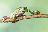 Frog and a snail on a branch