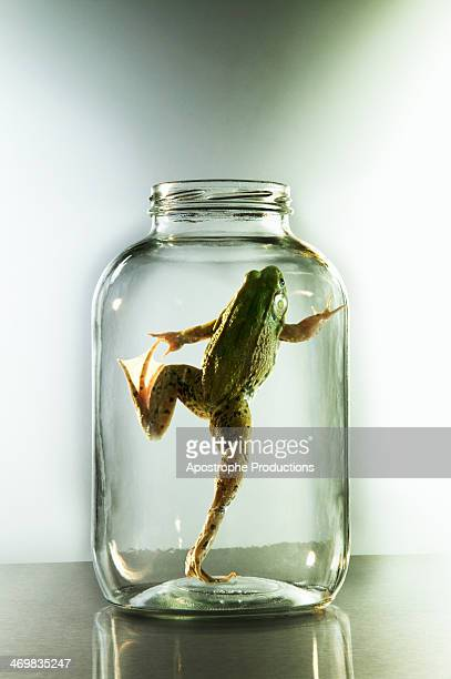 frog attempting to get out of jar. - blacksburg stock pictures, royalty-free photos & images