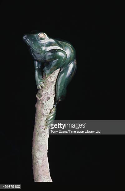 A frog carved from semiprecious stone created by Peter Carl Fabergé's workshop circa 1980