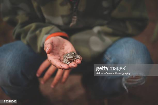 Frog Catcher