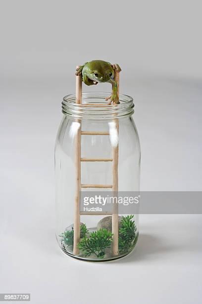 A frog climbing down a ladder