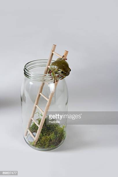 A frog climbing out of a jar