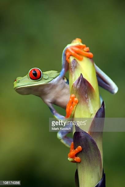 A frog clinging onto a stem leaf