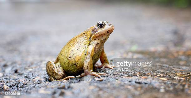 frog, close up - frog stock pictures, royalty-free photos & images
