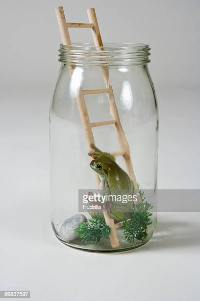 A frog in a jar on a ladder