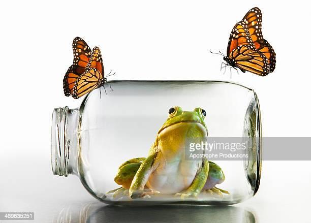 frog in jar watching butterflies - blacksburg stock pictures, royalty-free photos & images