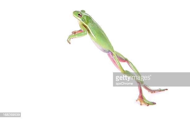 frog jumping - frog stock pictures, royalty-free photos & images