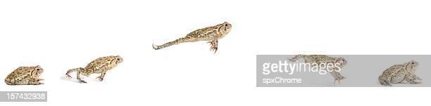 grenouille sautant séquence - grenouille photos et images de collection
