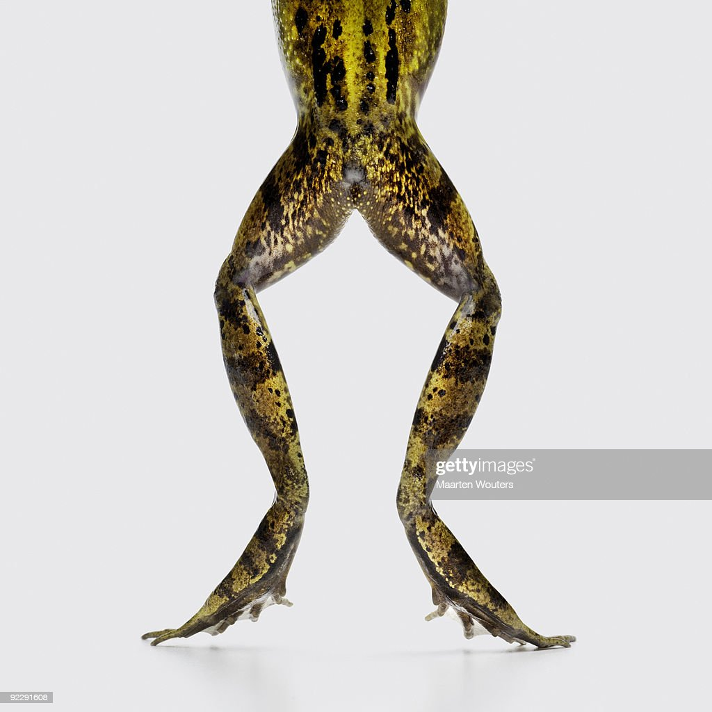 frog legs and bottom : Bildbanksbilder
