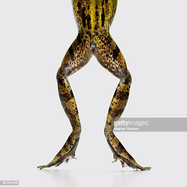 frog legs and bottom