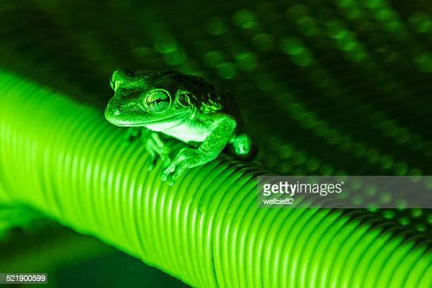 Frog lit up in green light