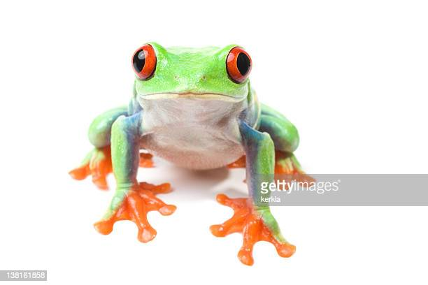 Frog looking curious isolated on white