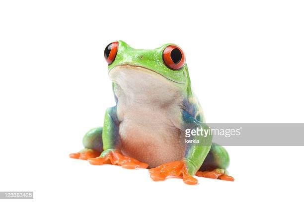 la grenouille curieux - grenouille photos et images de collection