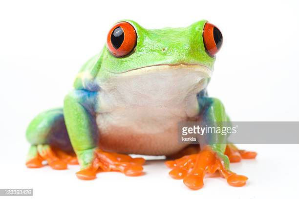 frog looking curious - tree frog stock pictures, royalty-free photos & images