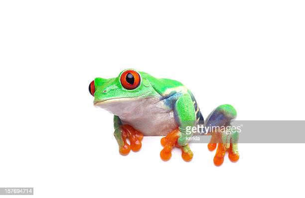 frog looking curious sitting on an edge - tree frog stock pictures, royalty-free photos & images