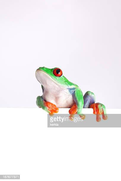 frog looking up curious while sitting on an blank sign - tree frog stock pictures, royalty-free photos & images
