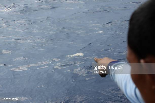Frog Man team from Indonesian Navy discovered the body part of the victims during the SAR operation of Lion Air JT 610 aircraft in the Karawang Bay...
