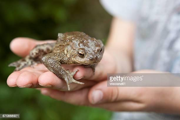 Frog on boys hand