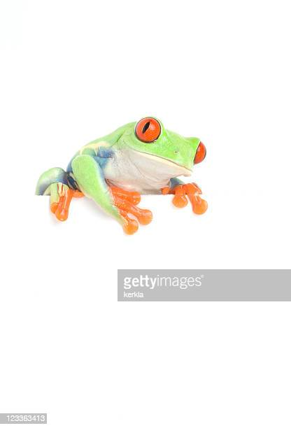frog on white blank sign