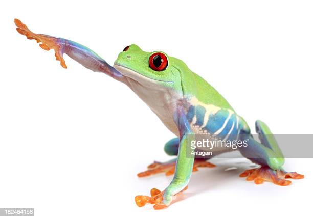 frog - tree frog stock pictures, royalty-free photos & images