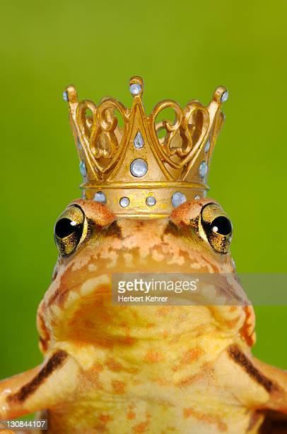 Frog Prince, composing