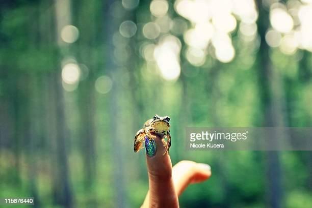 Frog Prince sitting on girl  finger in forest