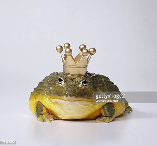 Frog prince with crown