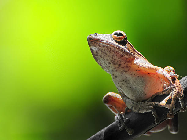 Frog Resting On A Branch Wall Art