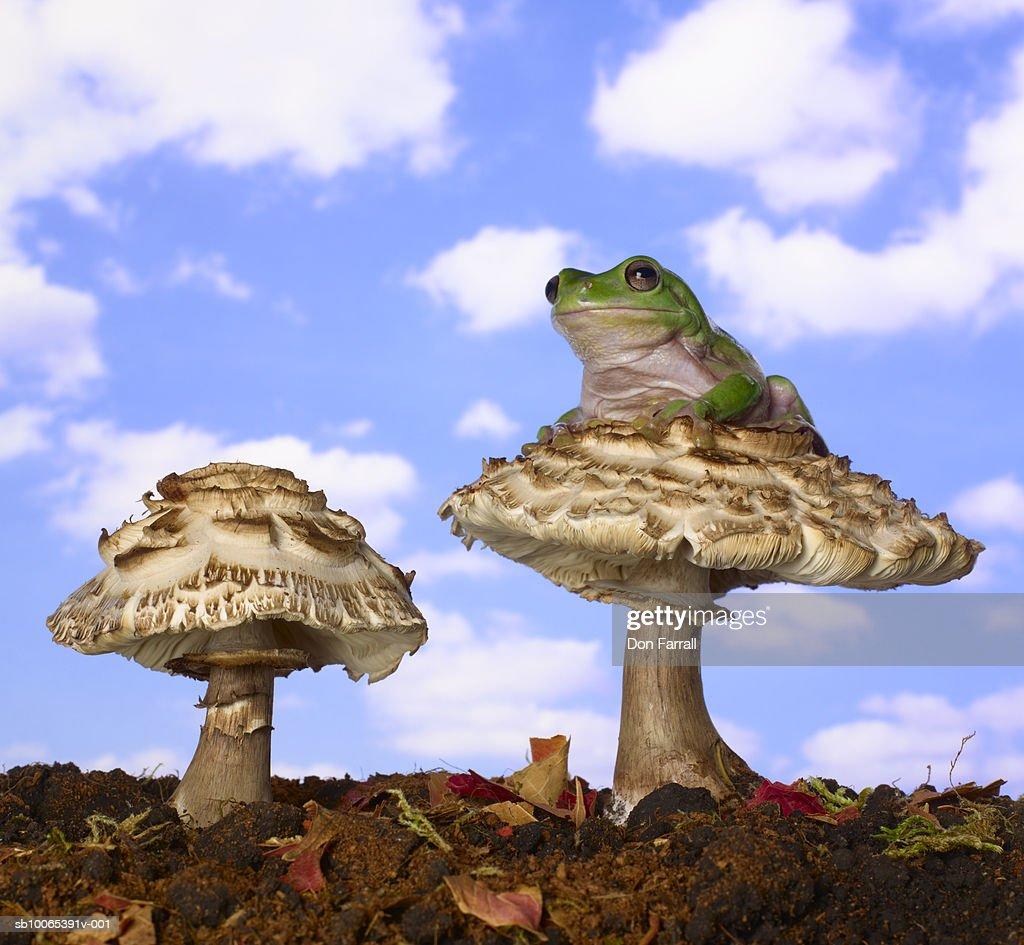 Frog sitting on mushroom against blue sky (Digital Composite) : Foto stock