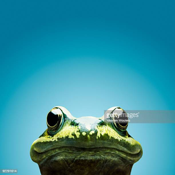 frog smile - frog stock pictures, royalty-free photos & images