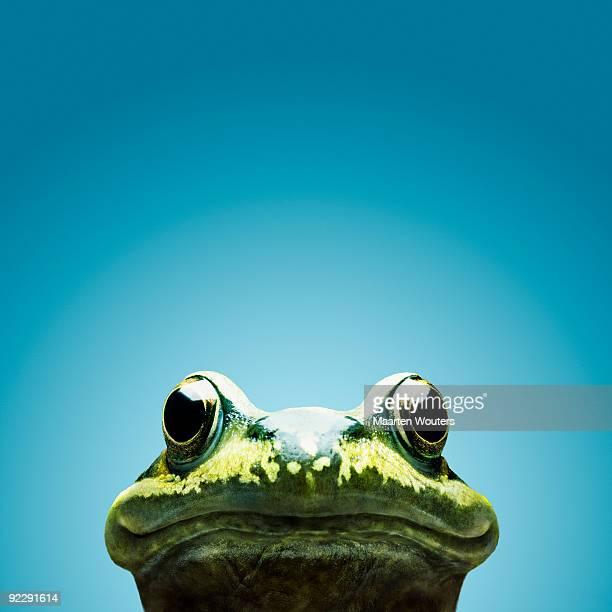 frog smile