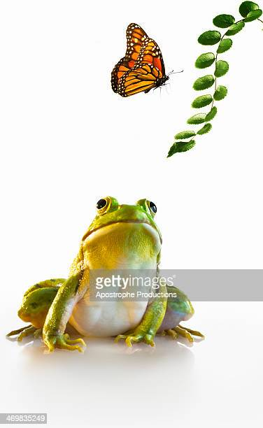 Frog watching Butterfly.