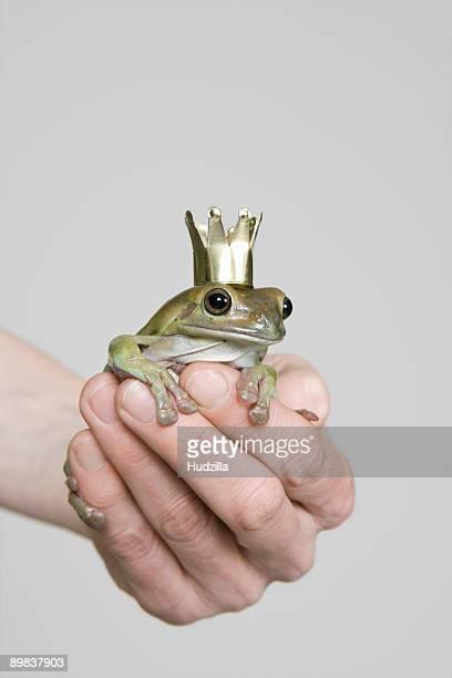 A frog wearing a crown, studio shot